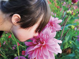 Appel à la générosité – Dons de plantes